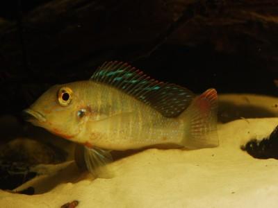 nowa-dostawa-ryb-brazylia-21062017